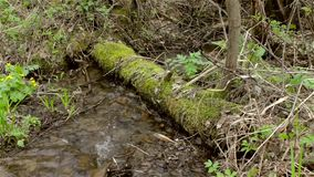 Streams of a mountain stream, river among the moss-covered trees. HD stock video