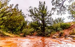 Streams and Puddles on the red sandstone hiking trails near Chimney Rock during heavy rainfall in Sedona. Northern Arizona, United Sates of America royalty free stock image