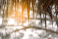Streams of rain drop from the thatched. Natural materials roof royalty free stock photo