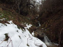 Streams with river and dense vegetation. In the countryside and little snow Royalty Free Stock Image