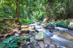 Streams in the tropical rainforest. In thailand Stock Photos