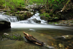 Streams in the woods. A location in the woods where two streams converge Royalty Free Stock Image