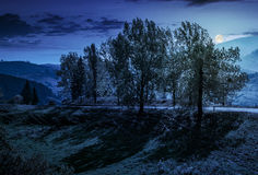 Strecke der Pappelbäume durch die Straße auf Abhang nachts lizenzfreie stockfotos