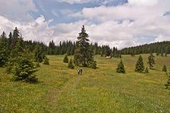 Stredna polana meadow Stock Photo