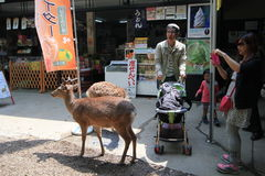 Stree view in Nara Japan Royalty Free Stock Photography