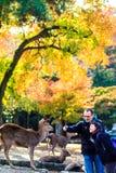 Streemening van Nara met aardige achtergrond Royalty-vrije Stock Foto