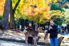 Streemening van Nara met aardige achtergrond Stock Foto's