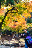 Streemening van Nara met aardige achtergrond Royalty-vrije Stock Afbeelding