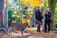 Streemening van Nara met aardige achtergrond Stock Foto