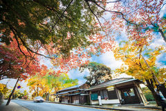 Streemening van Nara met aardige achtergrond Stock Afbeelding
