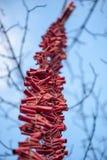 Streep van rode voetzoekers die in een boom hangen royalty-vrije stock afbeelding
