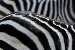 Streep van zebra Royalty-vrije Stock Foto's
