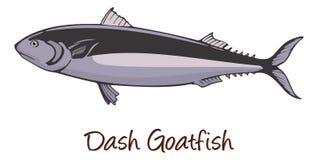 Streepje-en-punt Goatfish, de Illustratie van de Kleur Stock Afbeelding