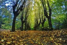 Streer di autunno immagini stock libere da diritti
