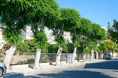 Street. Green street in Limassol, Cyprus Stock Photo