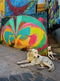 Street Art in Valparaíso. Valparaíso, CHILE - APRIL, 3, 2016: Streetart, graffiti on a wall of a wale two dogs laying in front of it in valparaiso on April, 3 Stock Image