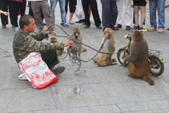Street artist, circus monkeys and bicycle,China Stock Images
