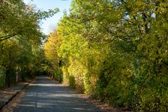 A street in autumn with many trees. In L.E.-City stock photo