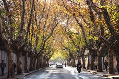 Street in autumn in Shanghai Stock Photos