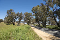 Street in Barossa Valley, Australia Royalty Free Stock Photos