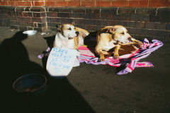 Street Beggar Dogs Royalty Free Stock Photos