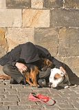 Street Beggar in Prague. Seeks warmth in the Autumn Sunshine with two dogs stock photo