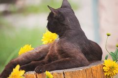 Street black graceful cat resting on a stump on a background of flowers stock images