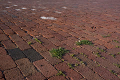 Street brick pavement Stock Photography