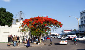 Street in Bulawayo Zimbabwe. ZIMBABWE, BULAWAYO, OCTOBER 27: Peoples on street in the second largest city in Zimbabwe, October 27, 2014, Zimbabwe Royalty Free Stock Photo