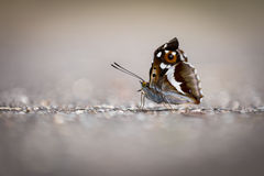 Street butterfly Royalty Free Stock Photography