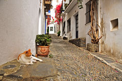 A street of Cadaques, Spain Royalty Free Stock Images