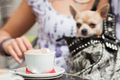 At a street cafe. Cup of cappuccino at a street cafe with a woman with a chihuahua dog out of focus in the background stock photos