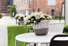 Street cafe detail. A white table with a pot of azalea flowers royalty free stock photography