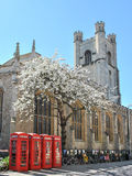 Street of Cambridge with four telephone boxes, a blooming tree, and a church in background Stock Image