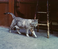 Street Cat, Christopher Street New York USA Stock Photography