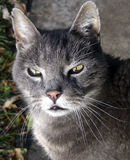 Street Cat. Showing signs of wear and tear Stock Photos