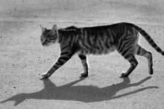 Street cat. A street cat in black and white-Gokceada-Turkey-2008 royalty free stock photos