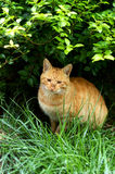 Street cat Stock Photos