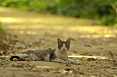 Street cat. Resting in a park Stock Photos