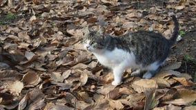 Street cat. In autumn park Stock Images