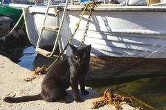 Street cat on the beach in the port city. The cat sits near the yacht and looks into the sea. stock photo