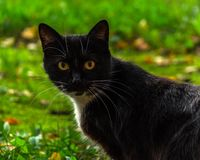 Street cat Royalty Free Stock Image