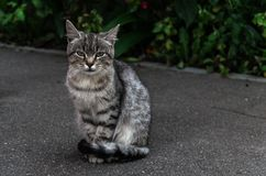 Street cat royalty free stock photography