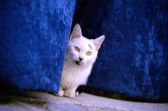 Street cat behind a velvet curtain in a Spanish village Stock Photo