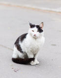Street cat Stock Photography