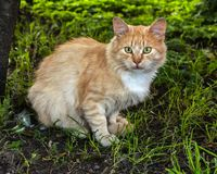 Street cat stock images