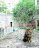 Street cat in city Royalty Free Stock Images