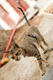 Street cat close-up portrait wearing sunglasses on its back Royalty Free Stock Image