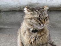 Street cat with a collar.  Royalty Free Stock Photography