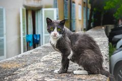 Street Cat in Croatia royalty free stock photography